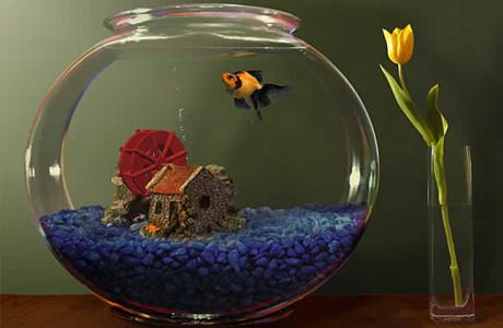 купить аквариум в подарок в Запорожье