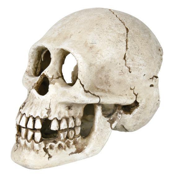 Декорация для аквариума и террариума череп 15 см
