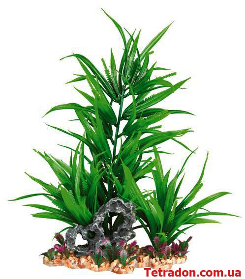 Зеленое растение в аквариум 28 см