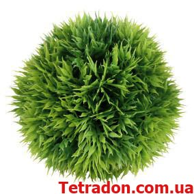 Растение круглое