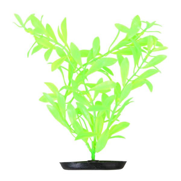 Гигрофила светло-зеленая 13см/20см/30см