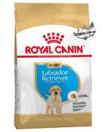 RC-labrador-puppy-logo