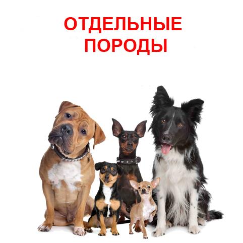 Корм для собак ОТДЕЛЬНЫХ пород