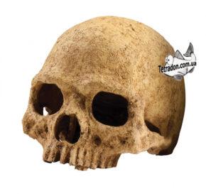 Primate_Skull-1-logo