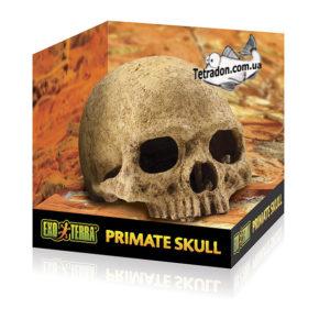 Primate_Skull_Packaging-logo