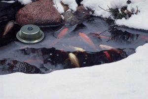 обогреваем пруд зимой