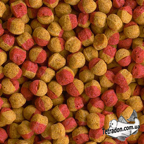 Tetra Cichlid Colour