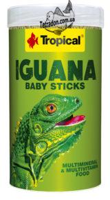 tropical-iguana-baby-logo