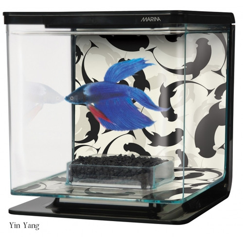 Betta Kit Ying/Yang