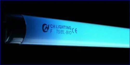 t5 24w sunsun blue