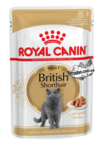 rc-british-shorthair-logo