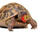 Корма, добавки и витамины для рептилий